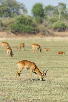 """Kalender """"Afrikas Tierwelt 2019"""""""