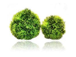 Plant Ball 9cm von Hobby