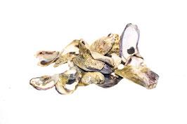 Austernschalen  natur ca. 5-20g / 10Stück