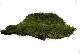 Stabilisierte Pflanzen Moosplatte 0.5 kg