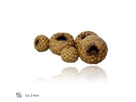 Rumbia Schlangenfrucht