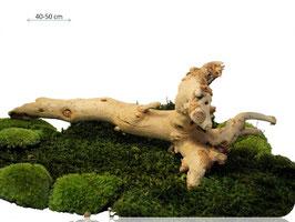 Gigante Root / Ghost Wood