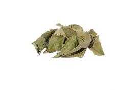 Baumnussblätter Braun oder Grün getrocknet  minimum 10 Stück