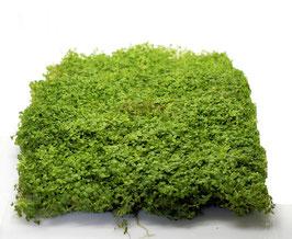 Pflanzen Matten / Epaqmat 20 x 15cm