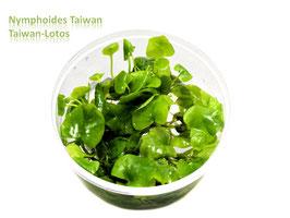Nymphoides hydrophylla Taiwan / Taiwan Lotos
