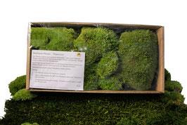 Stabilisierte Pflanzen Polstermoos