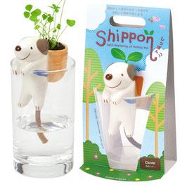 Plante à faire pousser Shippon Chien plant trèfle