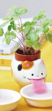 ¨Plante à faire pousser fraise des bois Chat Peropon
