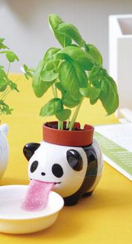 ¨Plante à faire pousser basilic Panda Peropon