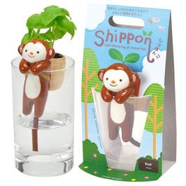 Plante à faire pousser Shippon Singe plant basilic