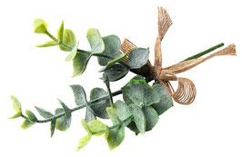 Branche Feuille d'Eucalyptus, Noeud Jute
