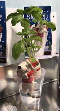 Shippon Chien de Noel Plant Basilic