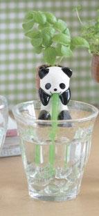 ¨Plante à faire pousser plant basilic Chuppon Panda