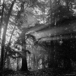Morning light - afdruk op 40x60