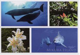 ポストカード・御蔵島の風景