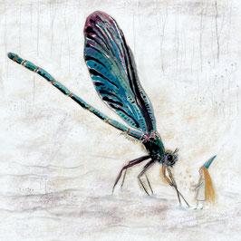 Libelle und Fee