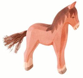 Haflinger Fohlen Pferd