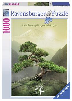 Zen Baum