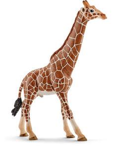 Giraffenbulle