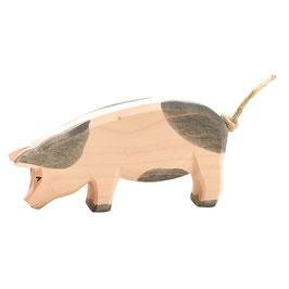 Schwein - tief gefleckt