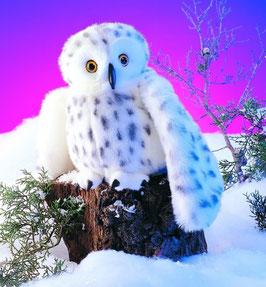 Schnee Eule