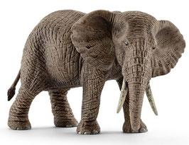Elefantenkuh - Afrikanische
