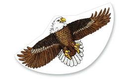 Drachen See Adler Seeadler