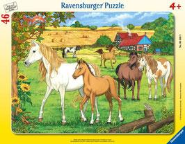 Pferde auf der Koppel - 30 bis 48 Teile - Verschiedene Motive