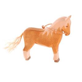 Haflinger - Pferd