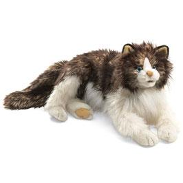 Ragdoll Cat wuschelige Katze