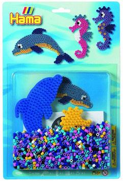 Unterwasser Delfin und Seepferdchen