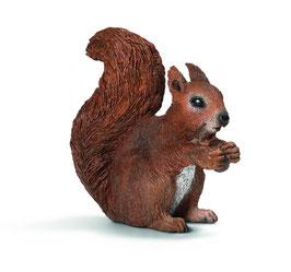 Eichhörnchen, fressend