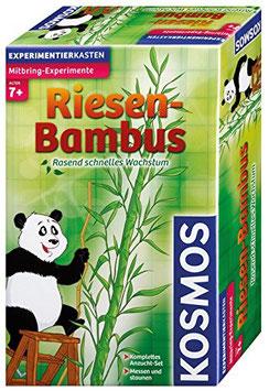Riesen Bambus