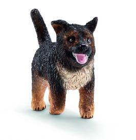 Schäferhund - Welpe