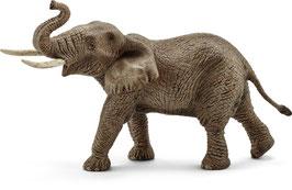 Elefantenbulle - Afrikanische