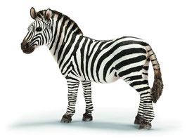 Zebra Stute