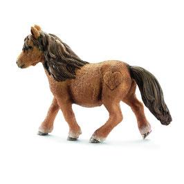 Shetland Pony Stute
