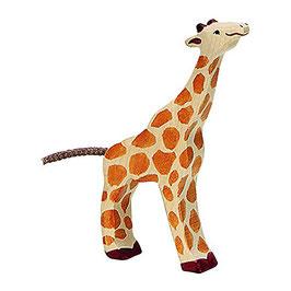 Giraffe - klein fressend