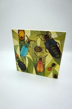 Bild Käfervielfalt