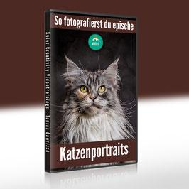 So fotografierst du epische Katzenportraits selbst
