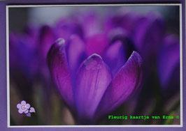 Lente 19