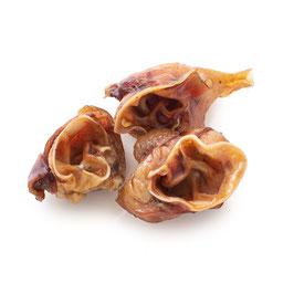 Schweineohrmuscheln 5 Stk.