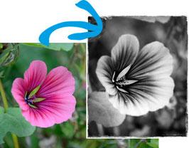 Bildbearbeitung mit Freeware (Gratis-Programme)