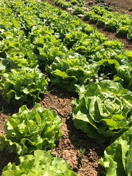 Lustiger Salat