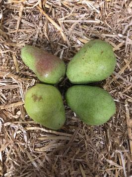 Grüne Birnen aus Wurmberg