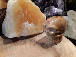 (18) schedel