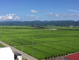 新潟|佐渡産コシヒカリ【玄米】5㎏|