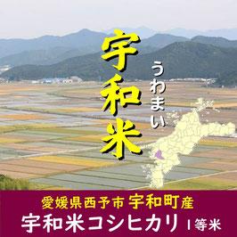 四国・愛媛|宇和米コシヒカリ【玄米】5㎏|令和2年産