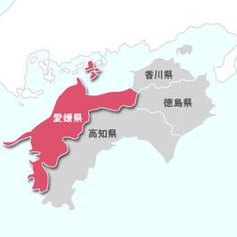 愛媛県宇和米コシヒカリ【玄米】 5kg しっかり粒感