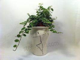 Pot Plante Danseur